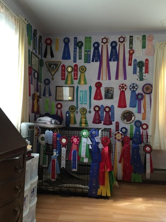 show dog ribbons