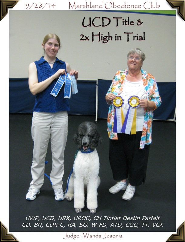 Obedience Poodle High in Trials
