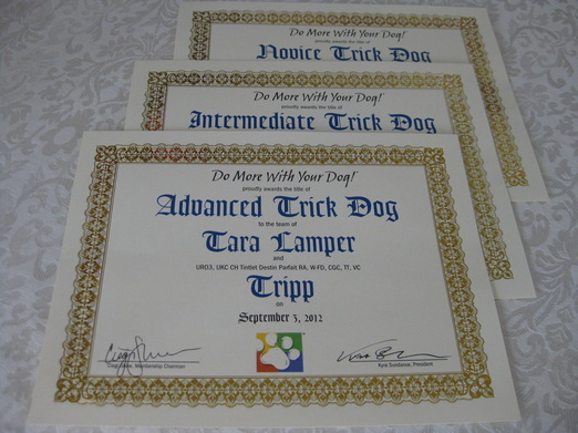 trick dog title certificates